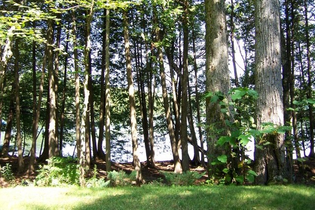 pet friendly cottage rental on big clear lake  cottages for rent southern ontario canada